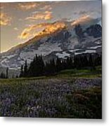Rainier Purple Lupine Carpet Metal Print