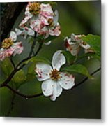 Rainy Day Dogwood Metal Print