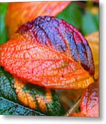 Rainy Day Leaves Metal Print