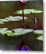 Rainy Day Lotus Flower Reflections IIi Metal Print