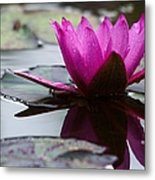 Rainy Day Water Lily Reflections 6 Metal Print