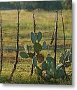 Ranch Cactus Metal Print