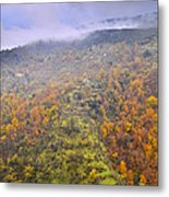Raniy Days In Automn Metal Print