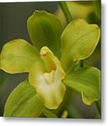 Rare Green Orchid Metal Print