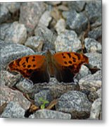Rarely-sighted Butterfly Species Metal Print