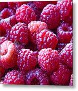 Homegrown Organic Raspberries, Chiloquin Oregon Metal Print
