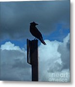 Raven Checking The Wind Metal Print