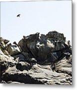 Raven Flying Over Tafoni Metal Print