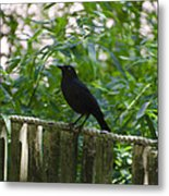 Raven In The Wild Metal Print