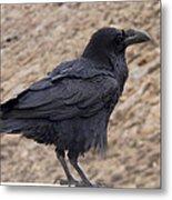 Raven Perched On A Ledge Metal Print