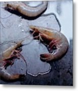 Raw Shrimp Metal Print