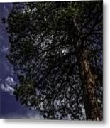 Reach The Sky Metal Print