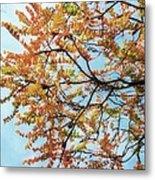 Reaching Autumn Metal Print