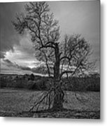 Reaching For The Light Vertical Metal Print
