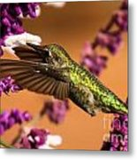 Reaching For The Nectar Metal Print