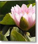 Reaching Lily Metal Print