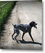 Ready For A Walk Metal Print