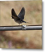 Ready For Flight Metal Print