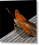 Ready For Liftoff Metal Print