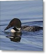 Ready To Dive Metal Print