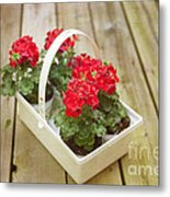 Ready To Plant Metal Print by Kay Pickens