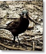 Really It Is Mine- Says The Grackle Bird Metal Print