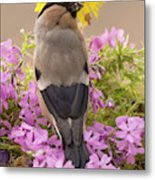Rear View Of Female Bullfinch Standing Metal Print