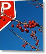 Rebellious Ornamental Crabapples In Autumn Metal Print