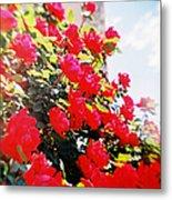 Recesky - Bright Roses Metal Print