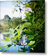 Recesky - Summer Oak Leaves Metal Print