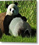 Reclining Panda Metal Print