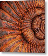 Recoiled 1 Metal Print