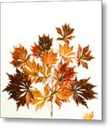 Reconstructed Full Moon Maple Metal Print