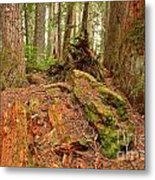 Recycling In The Cheakamus Rainforest Metal Print