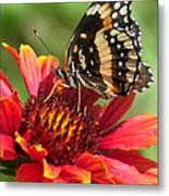 Bordered Patch Metal Print
