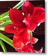 Red Amarillis Metal Print by Nora Vega