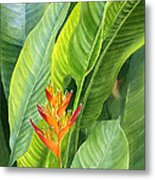Red And Gold Heliconia Metal Print