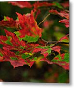 Red And Green Autumn Leaves Metal Print