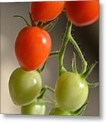 Red And Green Tomatoes Metal Print