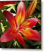 Red And Orange Lilly In The Garden Metal Print