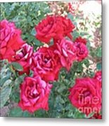 Red And Pink Roses Metal Print