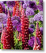 Red And Purple #1 Metal Print