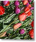 Red And Purple Tulips Metal Print