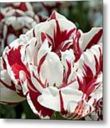 Red And White 6393 Metal Print