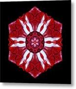 Red And White Amaryllis Iv Flower Mandala Metal Print