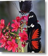 Red And White Longwing Butterflies  Metal Print