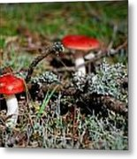 Red And White Mushrooms Metal Print