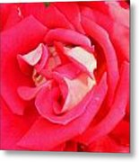 Red And White Rose Metal Print