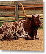 Red And White Texas Longhorn Metal Print