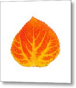 Red And Yellow Aspen Leaf 5 Metal Print
